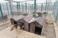 AVRUPA BIRLIĞI - Ankara'da 100 Bine Yakın Sokak Hayvanı Yaşıyor