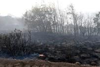 İLK MÜDAHALE - Eskişehir'deki Orman Yangınında 45 Hektarlık Alan Zarar Gördü