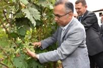 JANDARMA KOMUTANI - Safranbolu'da Bağbozumu Etkinliği