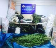 UYUŞTURUCU MADDE - Sakarya'da 39 Kilogram Esrar Maddesi Ele Geçirildi