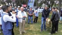 YAĞLI GÜREŞLER - Büyükşehir Belediye Başkanı Güreş Ağası Oldu