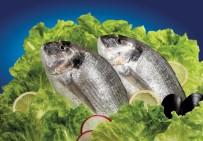 EGE İHRACATÇı BIRLIKLERI - Her Üç Balıktan Birini Bodrumlu Balıkçılar İhraç Edecek
