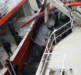 GıRGıR - Karadeniz'den En Çok Hamsi Ve Palamut Çıkıyor