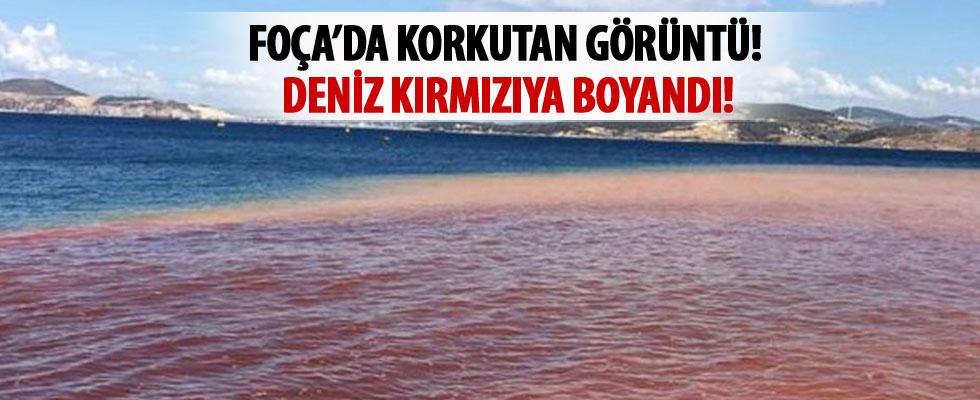 Yeni Foça'da denizin rengi değişti