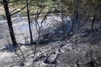 MUSTAFA AKSOY - Antalya'da Orman Yangını