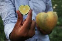 KÖRFEZ ÜLKELERI - Şekle Bürünen Meyveler İhracatta Servet Oldu