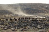 DİYARBAKIR - Yem Fiyatları Karacadağ'da Hayvancılığı Vurdu