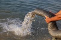AYNALı SAZAN - Barajlara 770 Bin Sazan Balığı Bırakıldı