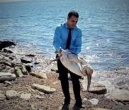 YENIÇIFTLIK - Yaralı Pelikanı Duyarlı Vatandaş Kurtardı