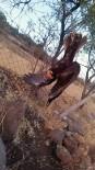 Ayaklarından Ağaca Bağlanan Şahin Kurtarıldı