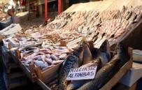 BALIK SEZONU - Yasak Kalktı, En Pahalı Balığın Kilosu Bile 15 Liraya Düştü