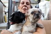 EV ARKADAŞI - Kedi, Köpek Ve Papağanlar Yanmaktan Son Anda Kurtarıldı