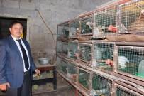 Süs Tavukları Trabzon'da Podyuma Çıkacak