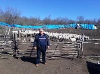 24 KASıM - Anaç Koyun-Keçi Destekleme Başvuruları Devam Ediyor