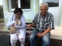 KÖPEK YAVRUSU - Muhtar Sokak Köpeklerini Sahiplendiriyor