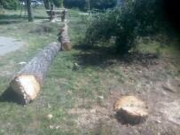 Siirt Üniversitesinde Ağaçların Kesilmesine Tepki