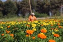 KAPALI ALAN - Bafra Ovası Çiçek Yatırımcısını Bekliyor