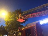 BAYRAM HEDİYESİ - Bu Kez Ağaçta Drone Mahsur Kaldı