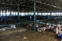 MURAT ÇELIK - Eskişehir'deki Hayvan Pazarı Eksiklikleriyle Büyük Tepki Çekiyor