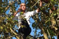 SÜTLÜCE - Yakınlarıyla Bayramlaşabilmek İçin Ağaçlara Çıktılar