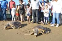 DENİZ KAPLUMBAĞALARI - Caretta Caretta Yavruları Denizle Buluştu