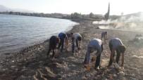 VAN GÖLÜ - Van Gölü'nün Sahilinde Çevre Temizliği Yapıldı