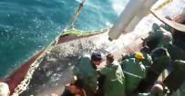 BALIKÇI TEKNESİ - Balıkçıların İlk Avında İstavrit Bereketi