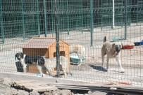 ÇEKIM - Başkan Bekler, Hayvan Barınağındaki Görüntüleri Değerlendirdi
