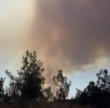 Bolu'da Orman Yangını Tekrar Başladı