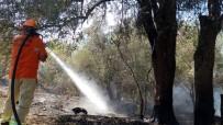 MEHMET YıLMAZ - Manavgat'ta Orman Yangını