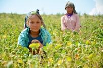 TARIM ARAZİSİ - Şanlıurfalı Tarım İşçilerinin Çocukları Okumak İstiyor