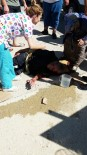 DİYALİZ HASTASI - Sinop'ta Yayaya Çarpan Araç Kaçtı