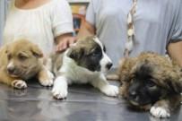 AKSAZ DENIZ ÜSSÜ - 3 Yavru Köpeğe İşkence Yapan Askere Soruşturma