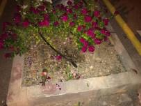 DALYAN - Belediyenin Diktiği Çiçekleri Koparıp Götürdü