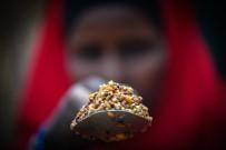 BREZILYA - Küresel Tahıl Üretimi Yeni Bir Rekora Giderken Tüketim Ve Stoklar Yükseliyor