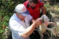 YAVRU KÖPEK - Kuyudaki Mazgala Sıkışan Yavru Köpeği İtfaiye Kurtardı