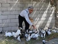 Tavşan yetiştirme hobisi ekmek kapısı oldu