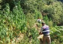 EYLEM PLANI - Jandarma Ormanlık Alanda Oluşturulan Zehir Tarlasını İmha Etti