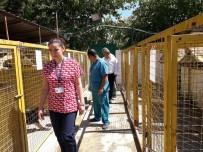 SAĞLIK KARNESİ - Muğla'daki Geçici Hayvan Barınağında İnceleme Yapıldı