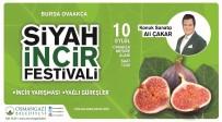 OVAAKÇA - Osmangazi'de Siyah İncir Festivali