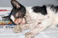BÜLENT ECEVIT - Harçlıklarını Yaralı Kedinin Tedavisine Harcadılar