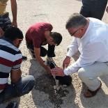 YAVRU KÖPEK - Yaralı Köpeğe İlk Müdahale Başkandan