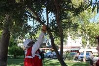 DALYAN - Öğrenciler Kuşlar İçin Ağaçlara Yemlik Astı