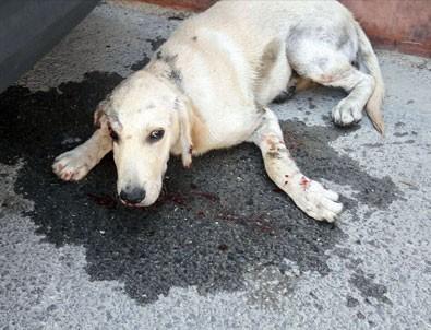 Hatay'da köpeğe şiddet dehşeti