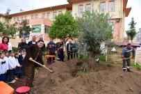 ÇOCUK PARKI - Anaokulu Bahçesine Asırlık Zeytin Ağacı