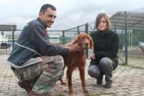 SOKAK HAYVANI - Kocaeli'de Bin 200 Sokak Hayvanı Sahiplendirildi