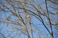 YAVRU KEDİ - Ağaçta Kalan Kedi İçin Operasyon