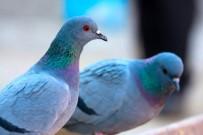 KAHVEHANE - Atılan Yeme Akın Eden Kuşların Görsel Şöleni