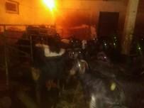 PORSUK - Çalınan Keçilerine Kavuştu