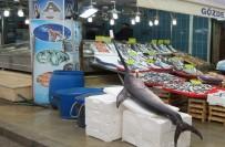 OKYANUS - Dev Kılıç Balığı Şaşırttı